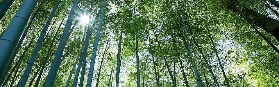 Vers Une Empreinte Carbone Neutre